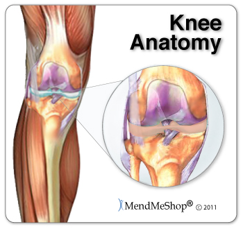 Knee anatomy of the lateral and medial menisci in the knee.